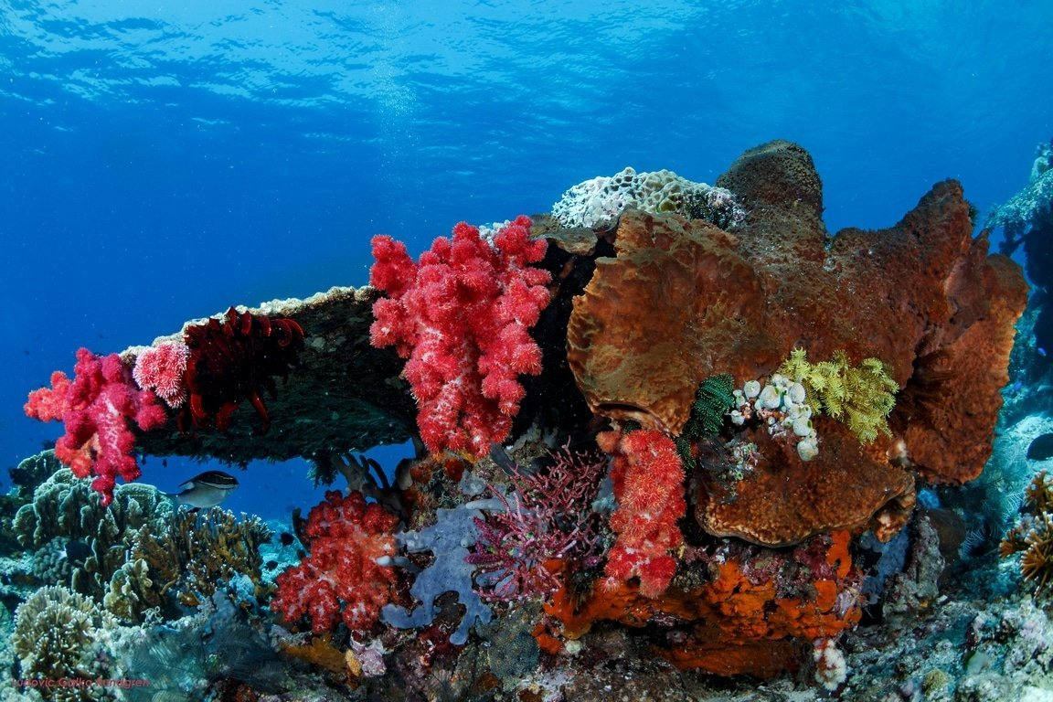 dragondive batu bolong table corail komodo
