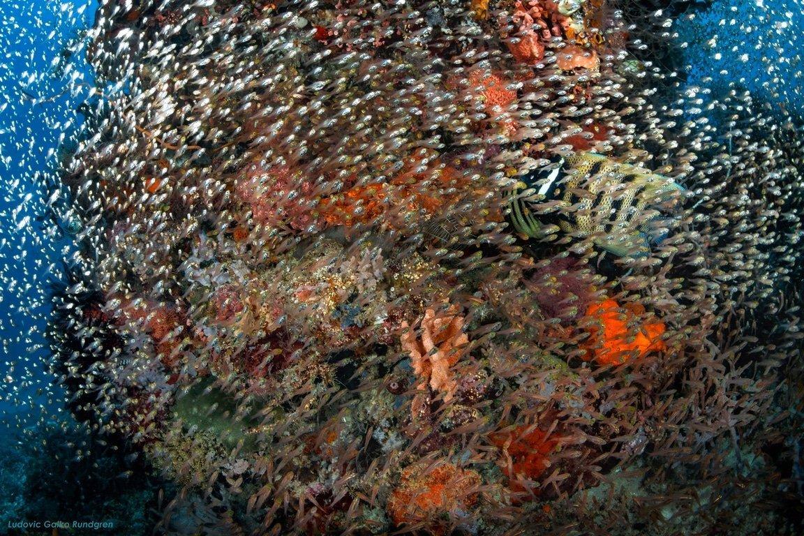 dragondive batu bolong vie marine komodo